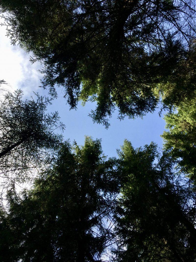 Terapie lesem, pohled na nebe skrz koruny stromů